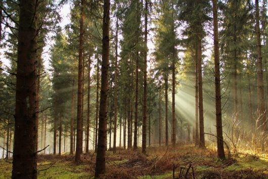 Jó hír az erdőtulajdonosoknak
