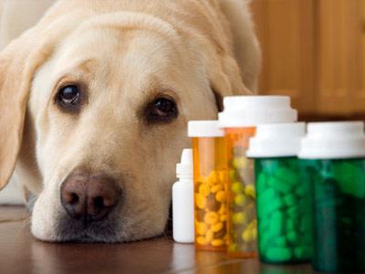 Nem támogatja az RMDSZ az állatgyógyászati termékek ellenőrizhetetlen kereskedelmére vonatkozó módosításokat